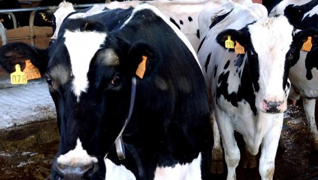 UPA-COAG-plantea-su-calendario-de-protestas-por-la-leche-que-incluye-boicot