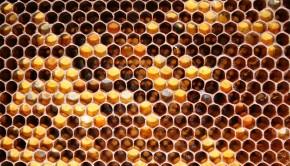 Food_Honey_honeycombs_036458_