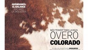 portada ovinos colorados