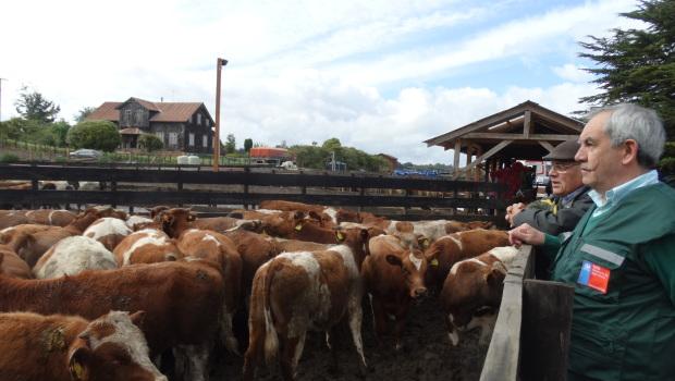 exportación de ganado a Turquía01